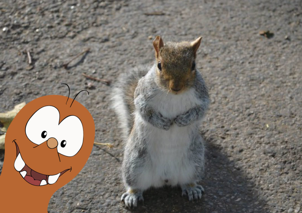 Squirrels in London_Tapsy Blog
