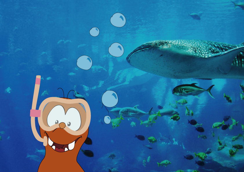 Barcelona aquarium in Europe with children_Tapsy Blog